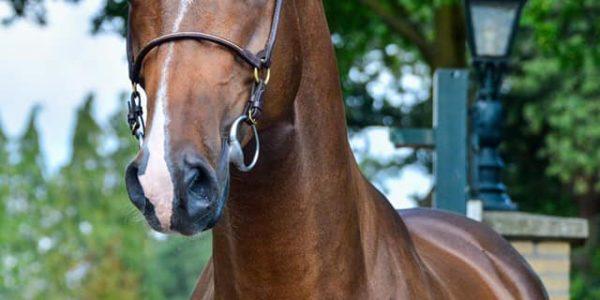 AMATEUR HORSE !